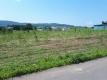 トラクターが潰した後の畑