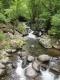 自然園の中の渓流
