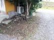 柿の木の下の草取り