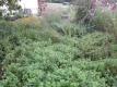 草が伸び放題の庭