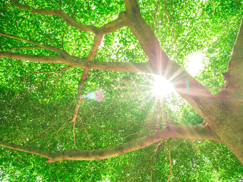 200215木