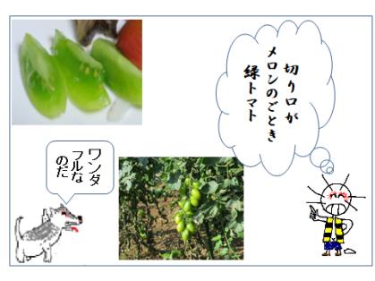 緑トマトで一句絵手紙