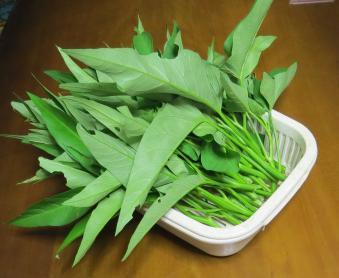 アサガオ菜収穫物1