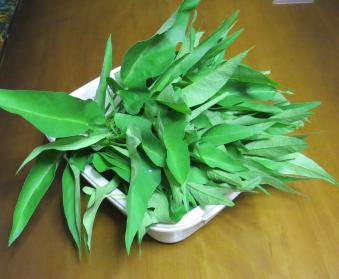 アサガオ菜収穫物2