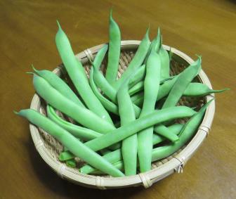 収穫物モロッコインゲン