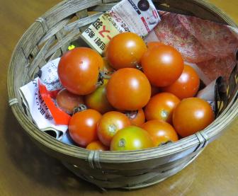 ミニトマト収穫物(11月)