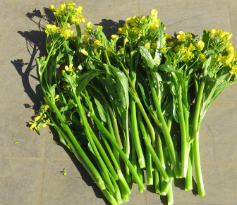 オータムポエム収穫物11月