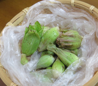 蕗の薹の収穫物