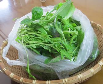 ビニールハウス野菜の収穫物1月