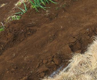 アスパラガスの畝表層削り