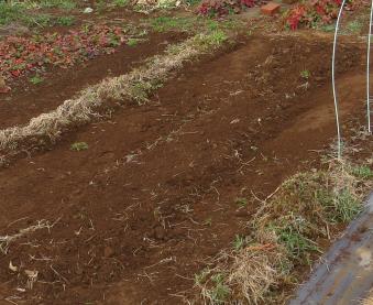 アスパラガスの表層を削り新土を盛った様子
