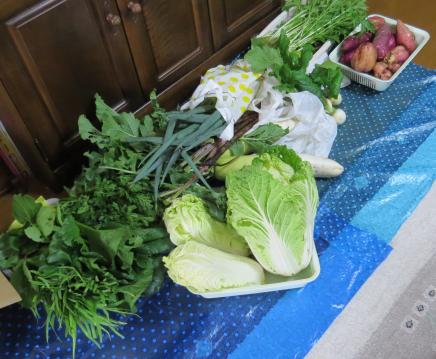 野菜収穫物10月下旬