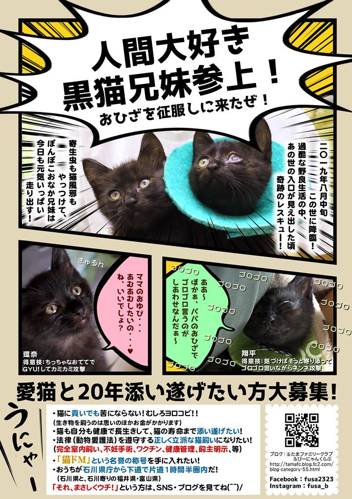 翔平と環奈里親募集チラシ 子猫里親募集 石川 富山 福井