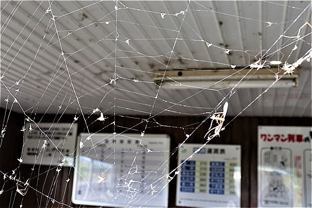 s-㉚蜘蛛の巣だらけ