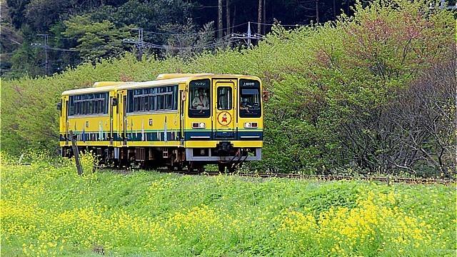 s-40回目新田野付近菜の花