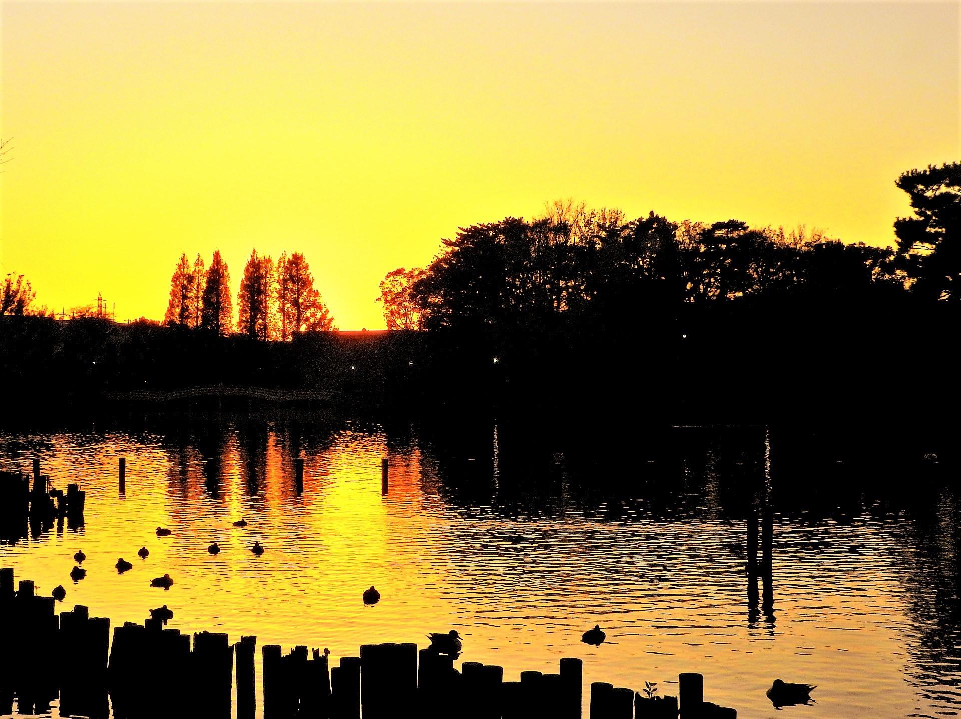 夕暮れ時の【洗足池】光景