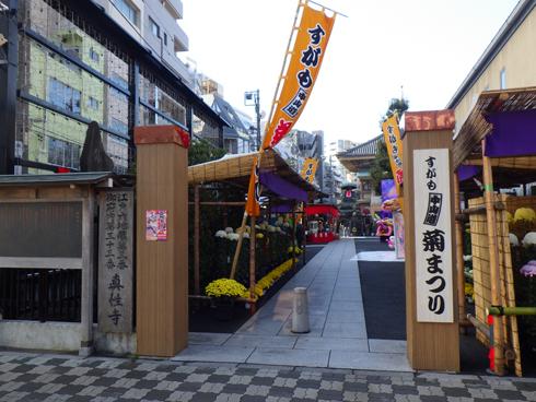 すがも中山道菊祭り-1