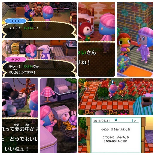 collage_photocat-u1.jpg