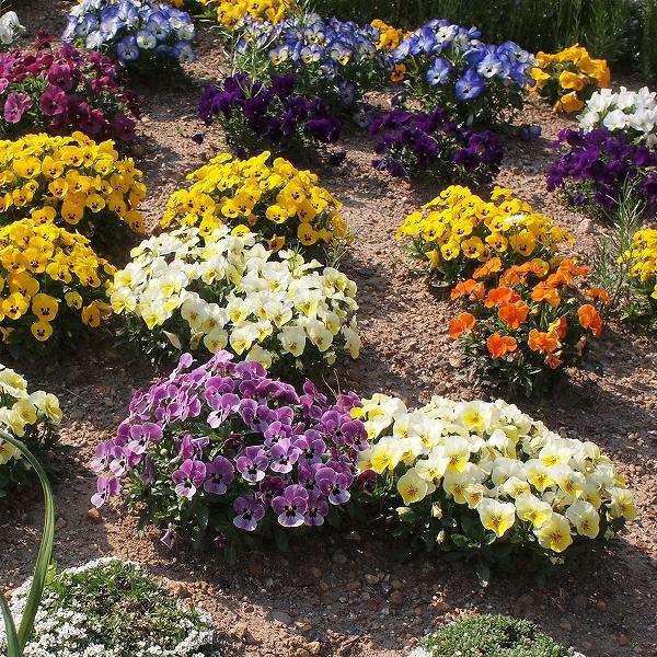 500色々な花