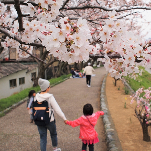 500桜の花と通行人191004