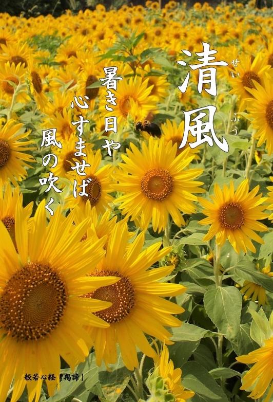 500写経会 絵葉書 51 清風