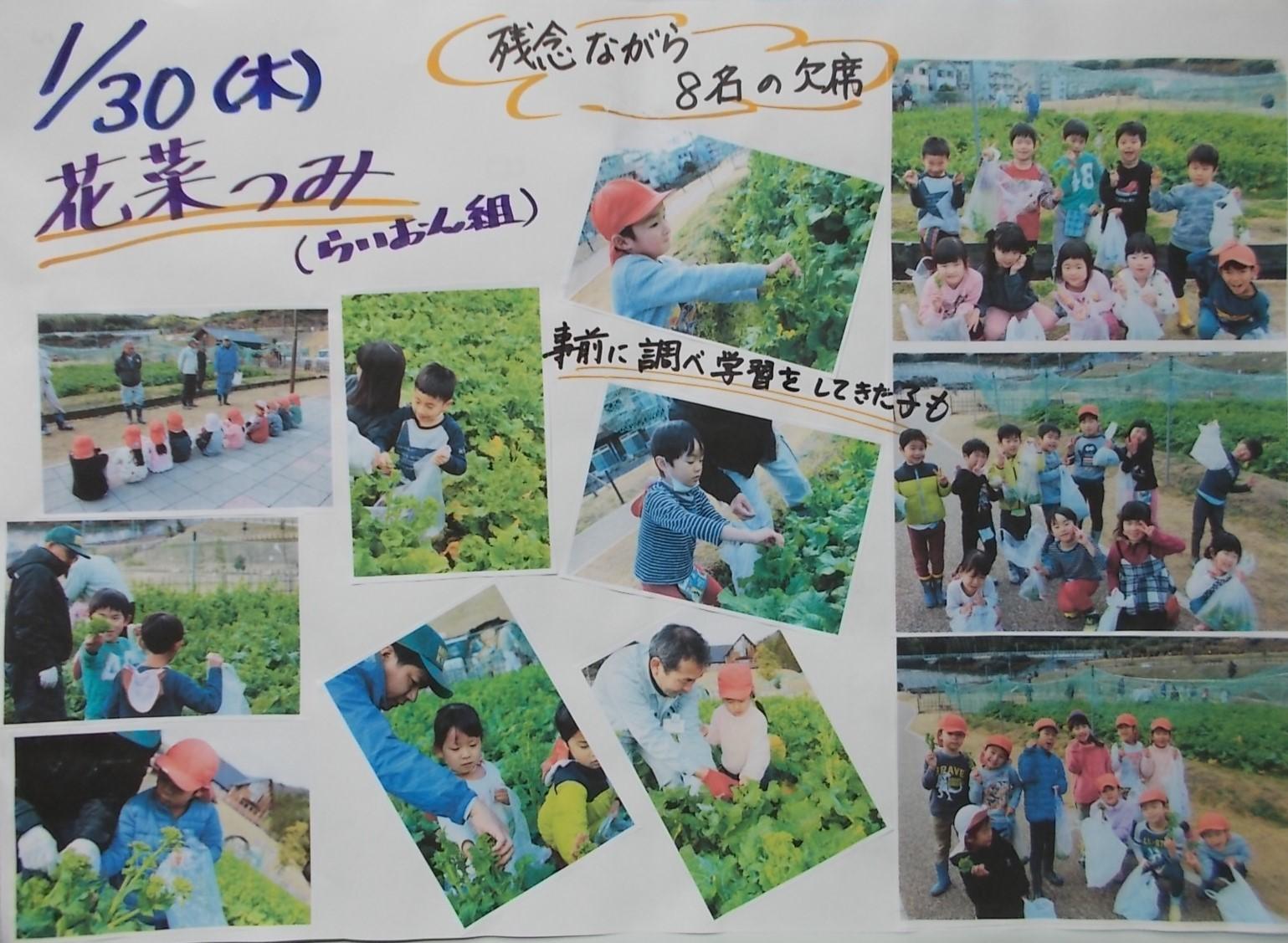 0130花菜摘み
