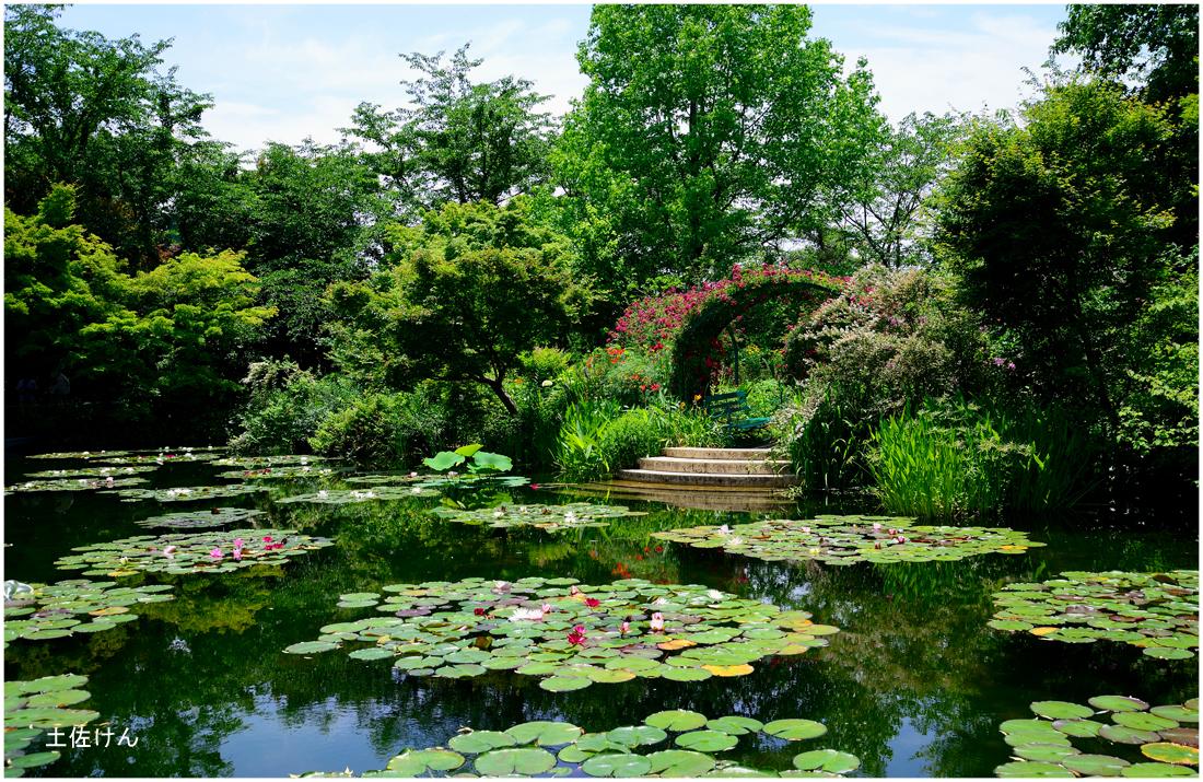 モネの庭2
