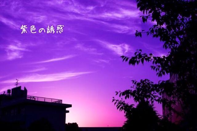 紫色の誘惑12