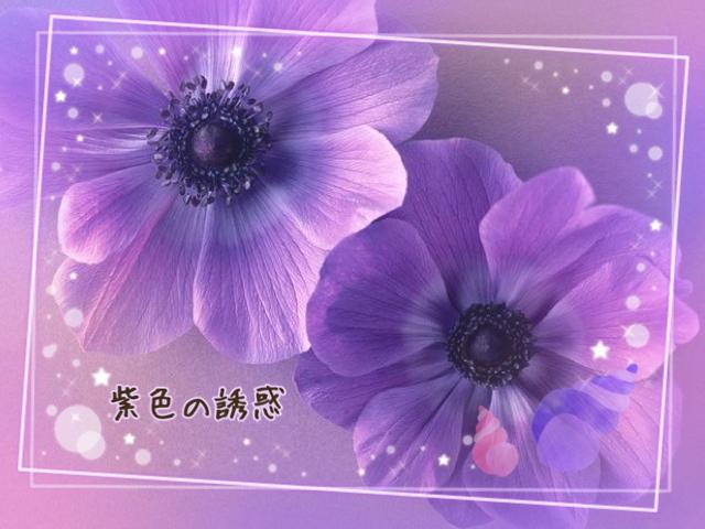紫色の誘惑15