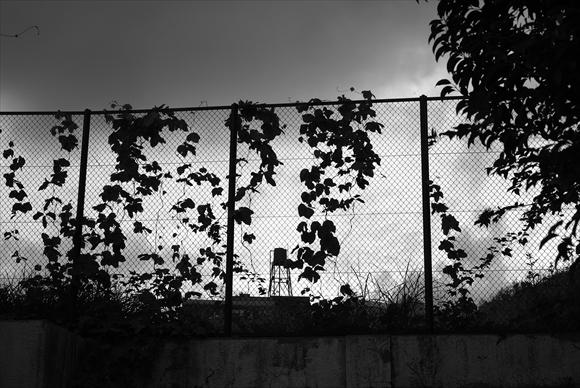 Fence-1_R.jpg