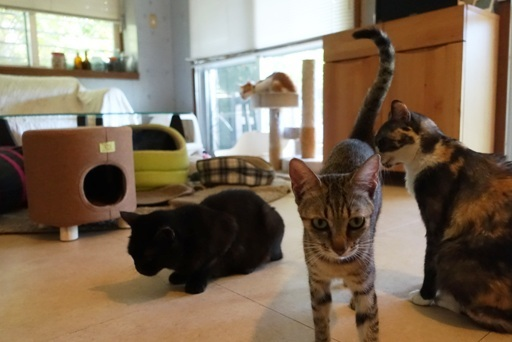 猫部屋a DSC00611