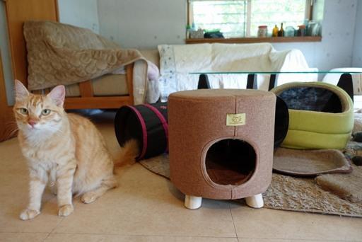 猫部屋c DSC00594
