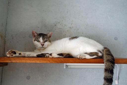 猫部屋d DSC00618
