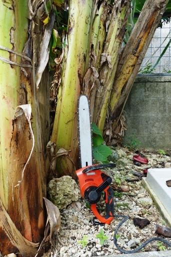 伐採c DSC01048
