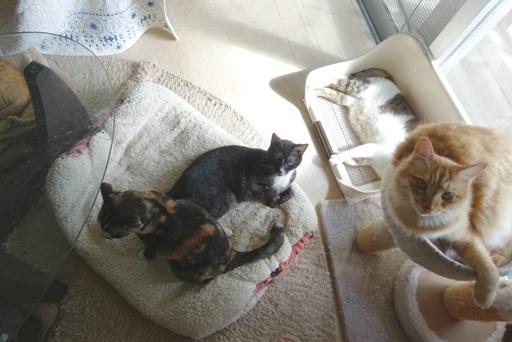猫a DSC01233