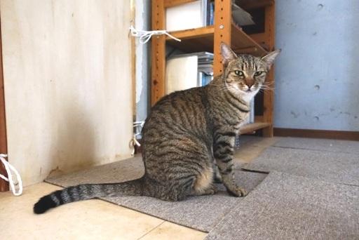 ボ~猫a DSC01241
