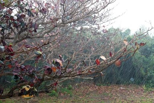 豪雨a DSC09477