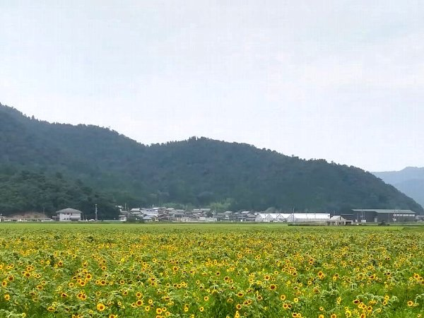 himawari2-obama-010.jpg