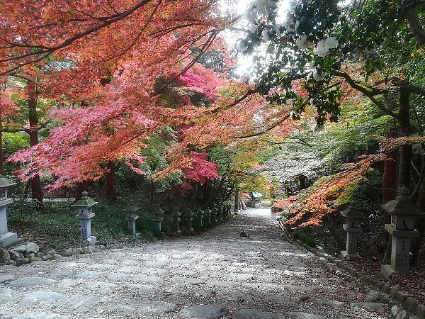 konomiyajnjya-shiga-059.jpg