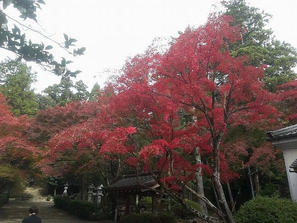 konomiyajnjya-shiga-060.jpg