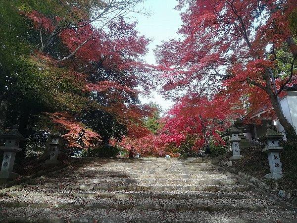 konomiyajnjya-shiga-098.jpg