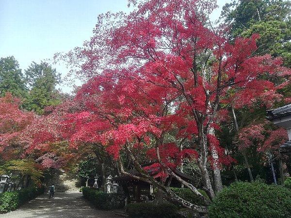konomiyajnjya-shiga-099.jpg