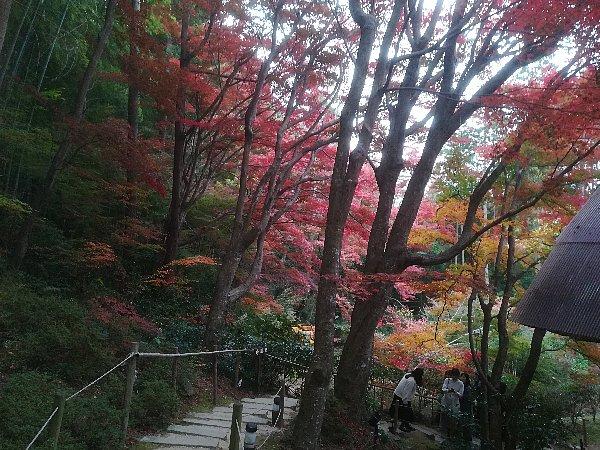 kyorinbo-shiga-042.jpg
