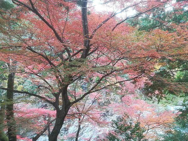 ootakijnjya-shiga-096.jpg