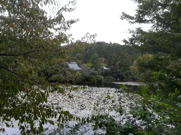 ryoanji-kyoto-072.jpg