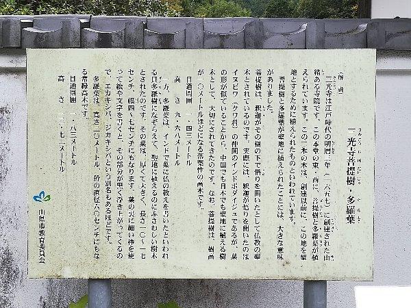 sankouji-yamagata-006.jpg