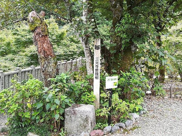 sankouji-yamagata-007.jpg
