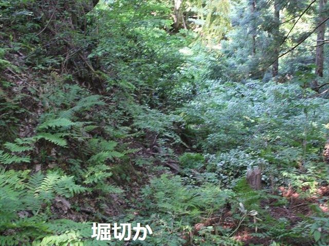 鮫ヶ尾IMG_3733