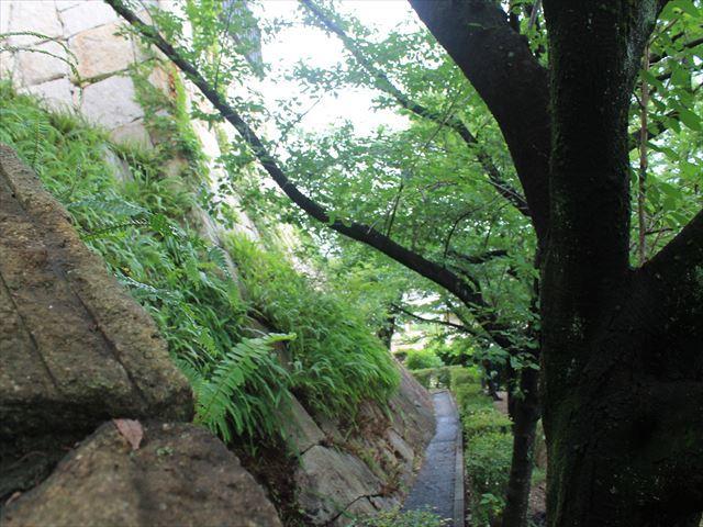 岩崎①IMG_4015