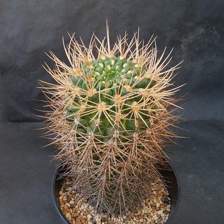 190729--DSC_2826--neuhuberi--Succseed seed 366